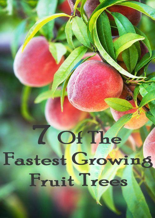 Best 25 Fruit Garden Ideas On Pinterest Growing Vegetables How