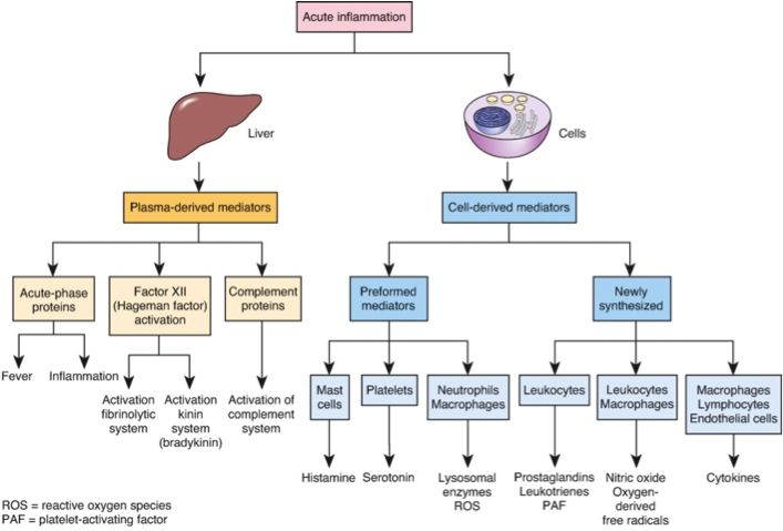 The Complement System Concept Map.Images Of Sepsis Concept Map Google Search Admitologist
