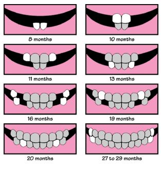 Baby teeth chart.  Good to know.