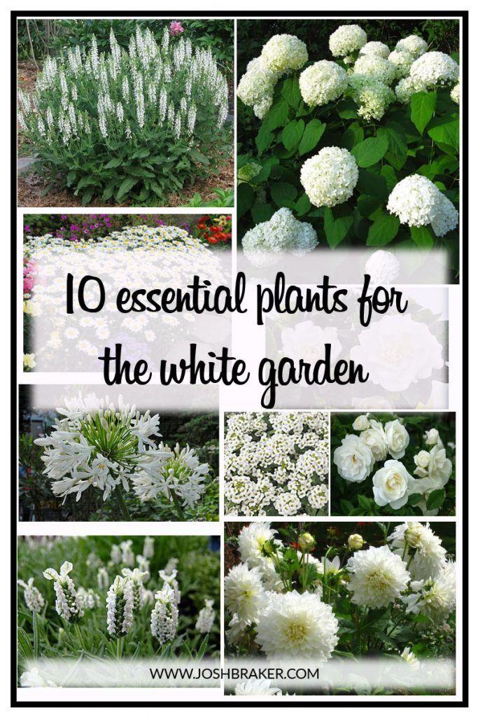 25 Best Ideas About White Gardens On Pinterest Snowball