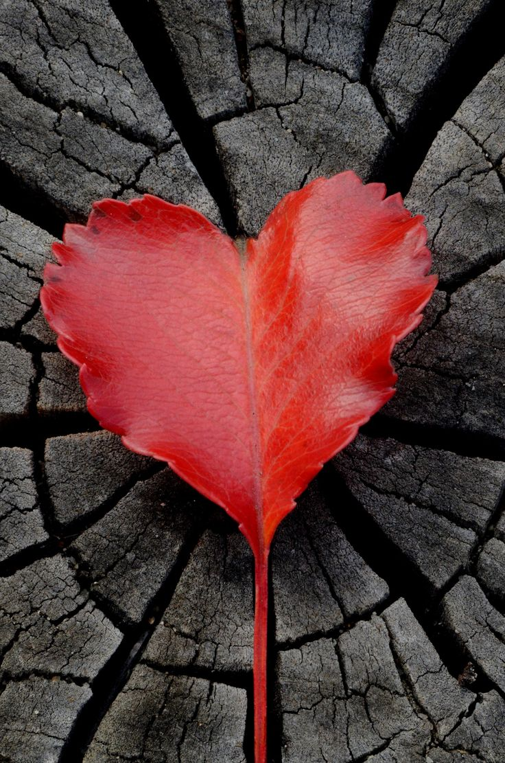1000 Images About HEARTS In LOVE On Pinterest Heart
