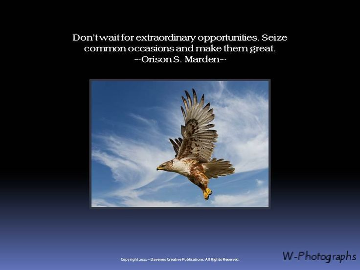 Eagle Scout Quotes And Sayings Have Courage For The