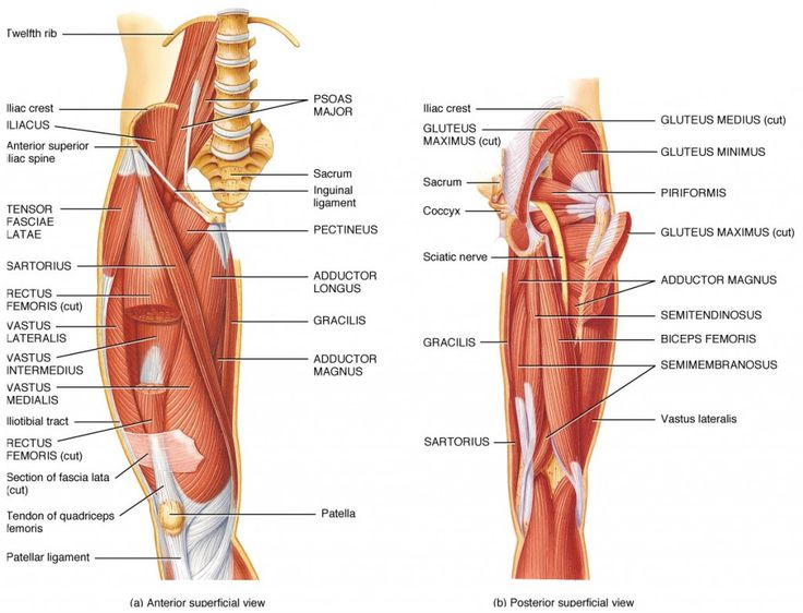 lower leg nerve diagram 2003 hyundai elantra engine muscle of - google search | workout pinterest posts, muscles and legs