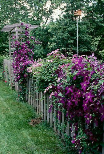 25 Best Ideas About Landscaping Along Fence On Pinterest