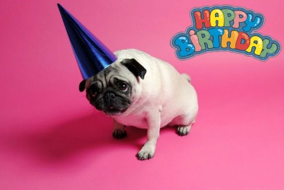 19 Best Images About PUG BIRTHDAY CARDS On Pinterest
