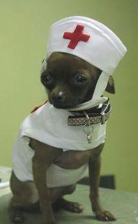 44 best images about Pet Nurses on Pinterest | Cats, Take ...