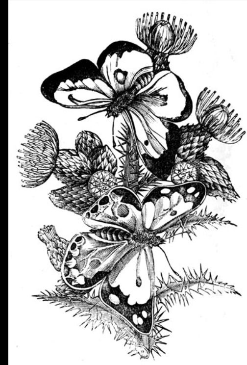 77 best Butterfly drawings images on Pinterest