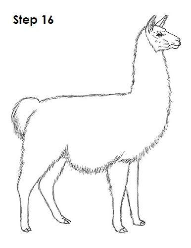 25+ Best Ideas about Cartoon Llama on Pinterest
