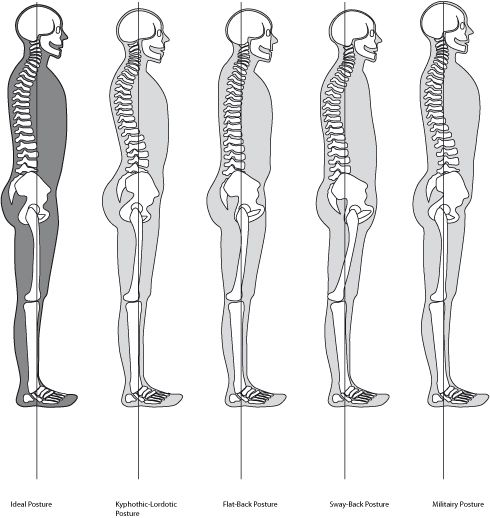 37 best images about Anatomy & Physiology