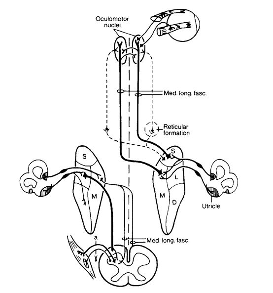 241 best images about Sensory systems on Pinterest