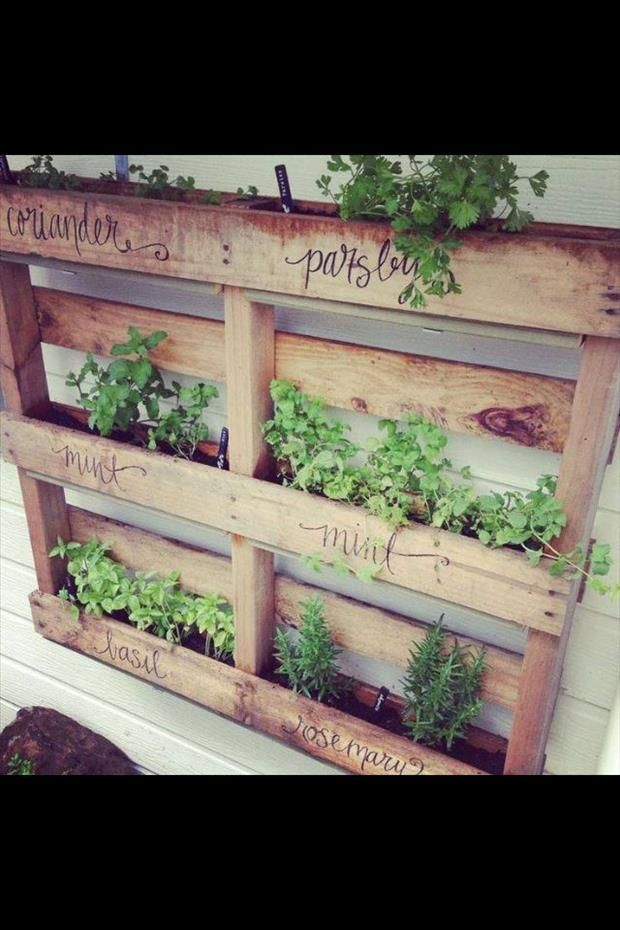 17 Best Ideas About Small Herb Gardens On Pinterest Indoor Herbs