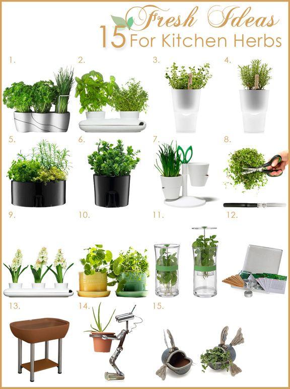 plants in kitchen  Fresh Herb Garden in the Kitchen