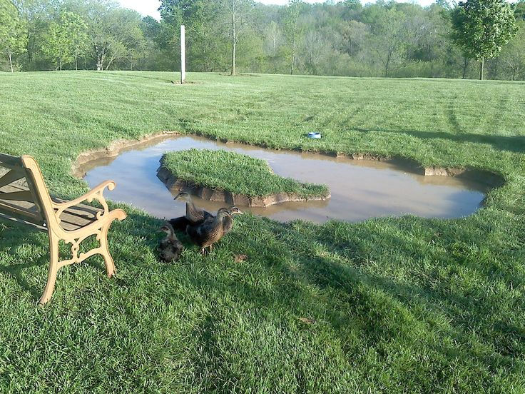 Backyard Duck Pond Created In A Weekend Could Be Finished