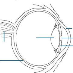 Blank Diagram Of Synapse 1984 Chevy Silverado Radio Wiring Anatomy, Eye To Label | Kids Science Experiments/ Crafts/school Ideas Pinterest Eyes ...