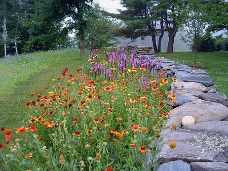 73 Best Images About Native Plant Gardening In MI On Pinterest