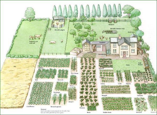 acre of land - 1-acre homestead