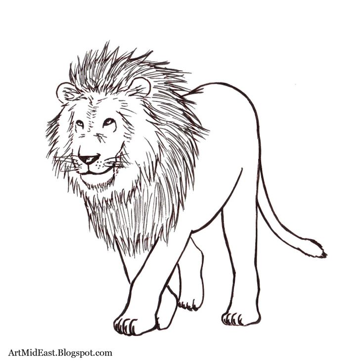 17 Best images about animal drawings for VBS on Pinterest