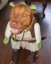 1000+ images about Pets in Halloween Costumes on Pinterest ...