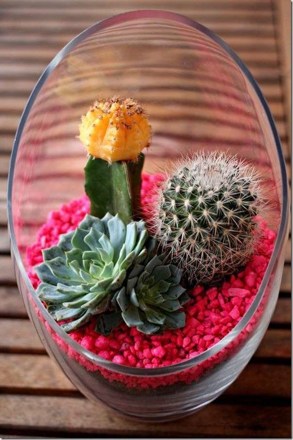 25 Best Ideas About Mini Cactus On Pinterest Mini Cactus Plants