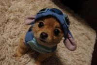 Dog + Stitch Costume=