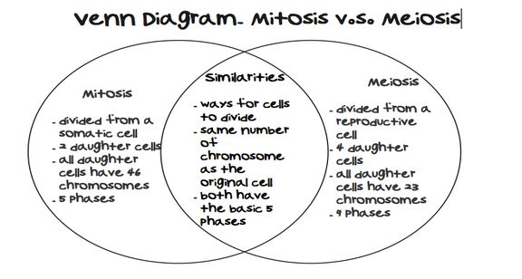 venn diagram comparing dna and rna bmw x5 e53 abs wiring #mitosis vs #meiosis contrasting mitosis meiosis | ...