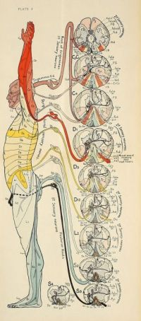 1000+ ideas about Nervous System on Pinterest | Central ...