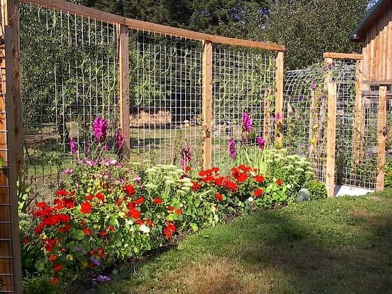 25 Best Ideas About Privacy Trellis On Pinterest Outdoor