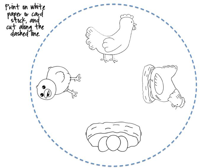 Life cycles, A chicken and Coloring on Pinterest