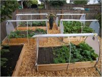 25+ best ideas about Vegetable garden layouts on Pinterest ...
