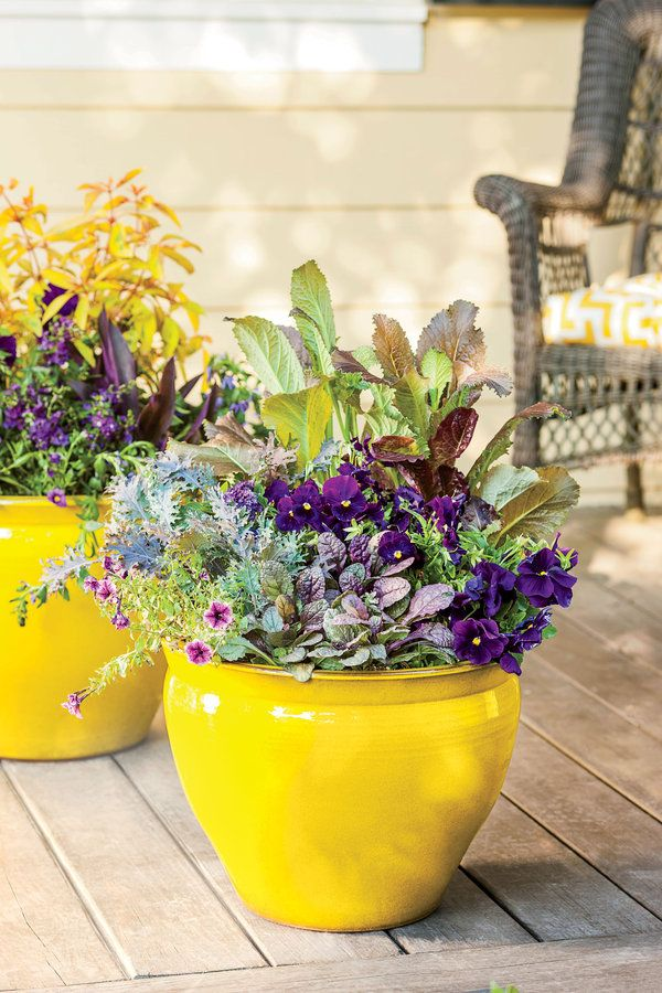165 Best Images About Container Plants For Dappled Light On