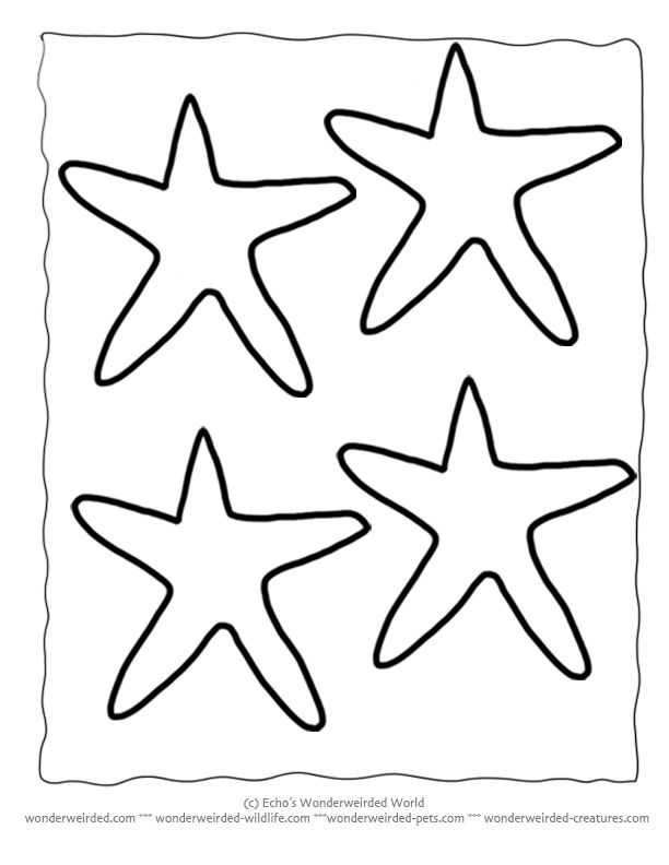25+ best ideas about Starfish Template on Pinterest