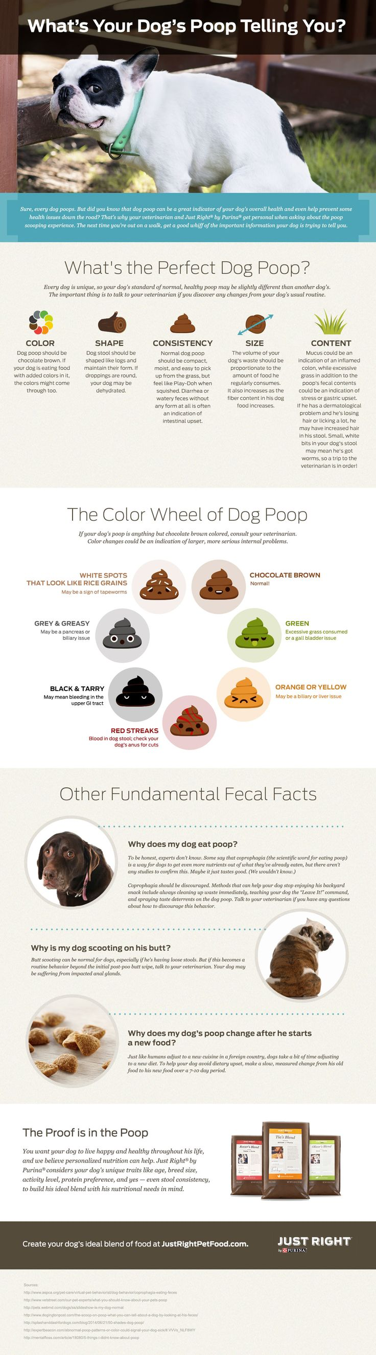 Dog Poop & What It Means | Just Right by Purina ...