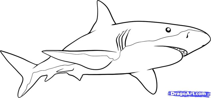 How to Draw a Shark, Step by Step, Fish, Animals, FREE