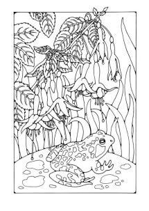 53 best FROGS COLORING PAGES images on Pinterest