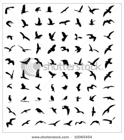 1000+ images about 1s Bird Silhouettes on Pinterest