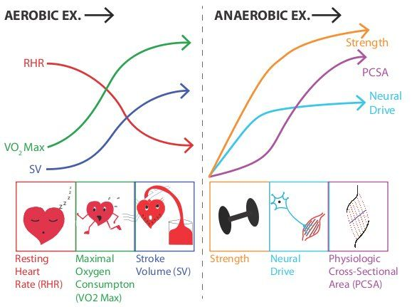 A Vo2 Difference Exercise Google Search Cardio