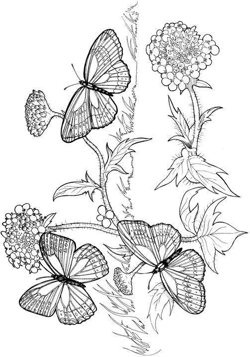 126 best Birds, Insects etc. Coloring Pages 2 images on
