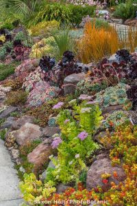 Best 25+ Sloped front yard ideas on Pinterest