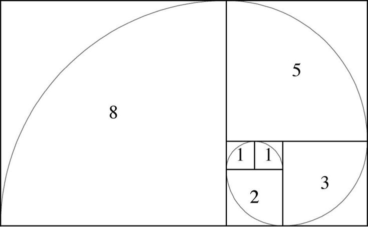 23 best images about Fibonacci spiral on Pinterest