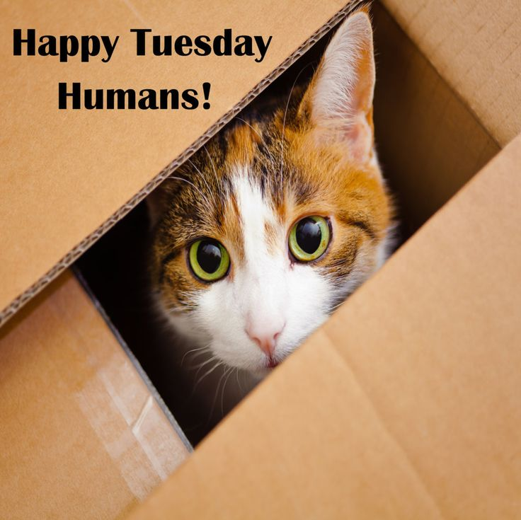 222 Best Images About Happy Days Of The Week On Pinterest Happy Friday The 13th Happy Tuesday