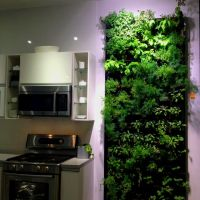 17 Best ideas about Herb Wall on Pinterest | Kitchen herbs ...