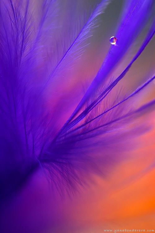 90 best images about Purple and Orange Color Mix on Pinterest