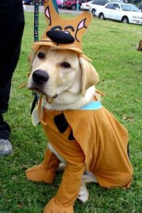 Scooby Doo Dog Costume | Dogs and Puppies | Pinterest ...