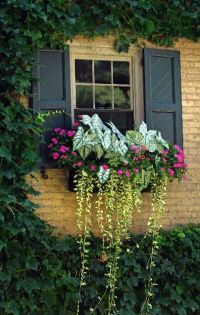 25+ best ideas about Window planters on Pinterest