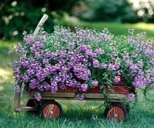 Pinterest Flower Garden Ideas