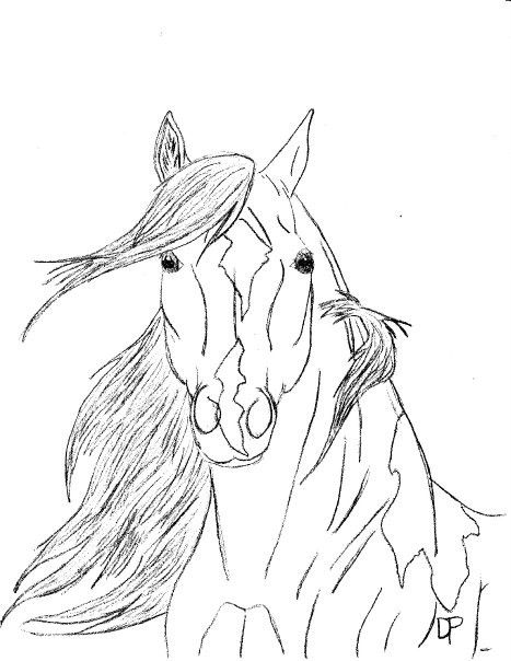 78 Best images about Drawings of horses/wolves on