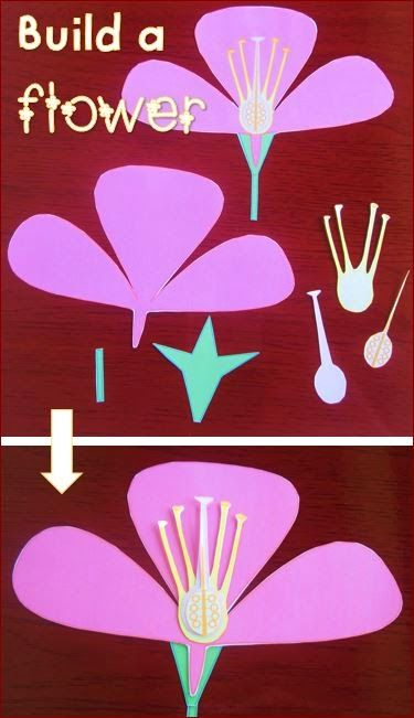 parts of a flower diagram for kids bmw x5 wiring activities -worksheets -flash cards -craft -quiz - word wall | classroom ...