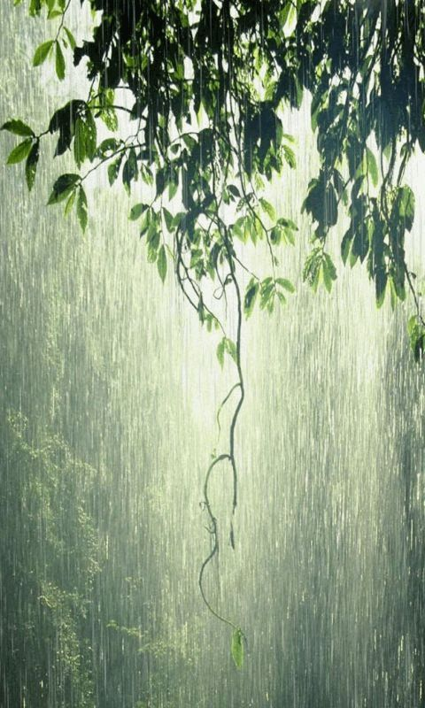 Water Falling Leaves Live Wallpaper Download 292 Best Raining Day Gif Images On Pinterest