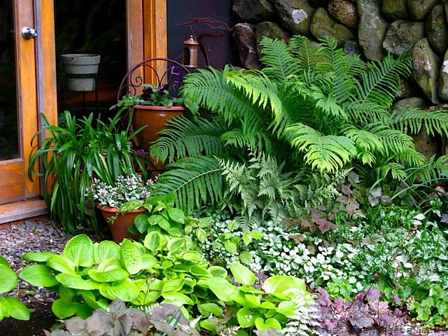 The 25 Best Ideas About Ferns Garden On Pinterest Ferns Fern