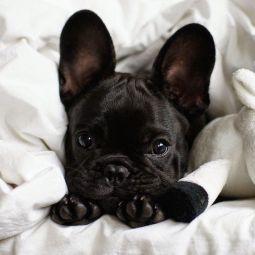 Image result for leave a dog alone pinterest
